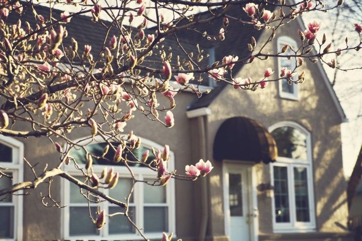 PBJ Studio Magnolia Blossoms