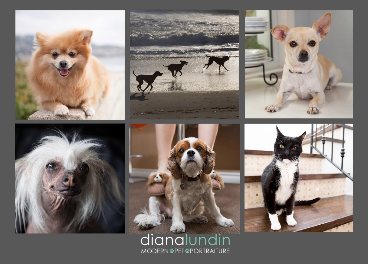 Los Angeles Pet Photography Modern Pet Portraiture Postcard