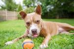 A Great Rescue Story / Regional Animal Shelter / NY Animal Photographer
