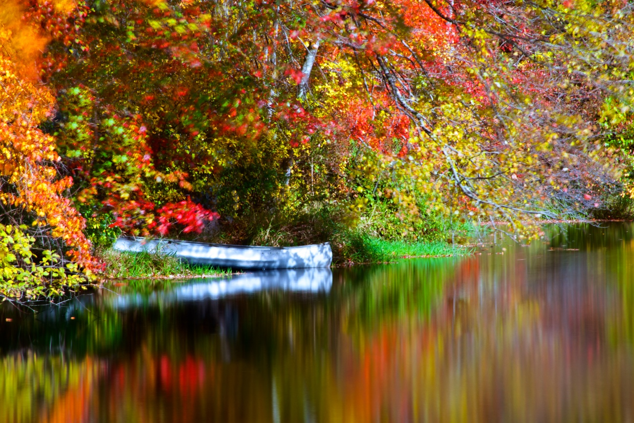 Image result for Autumn photographs