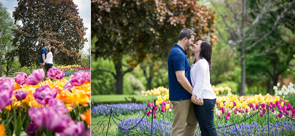 beautiful colored tulips, couple kissing in park